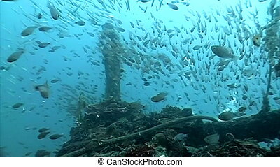 shipwreck - Bow of a shipwreck with thousands of tiny fishes...