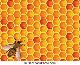 Bee with honeycomb - Vector illustration of bee with...