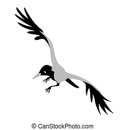 crow drawing on white background, vector illustration