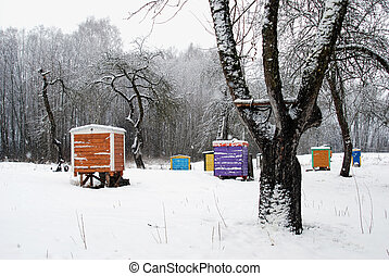 Hives cover snow colorful bee house winter tree - Hives...
