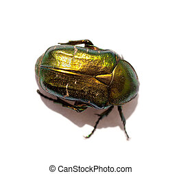 Green beetle isolated on a white background
