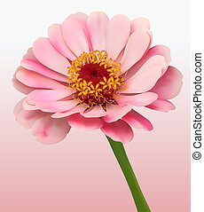 Flower Bloom Background