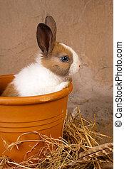 Bunny in a flowerpot