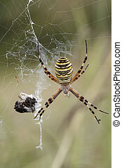 spider - Detail (close-up) of a spider