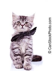 seated little silver tabby cat