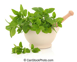 Oregano Herb - Oregano herb leaf sprigs in a cream stone...