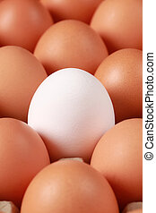 Eggs in a box - One white egg surrounded by brown eggs in a...