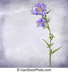 bluebell watercolor painting - Watercolor painting of a...