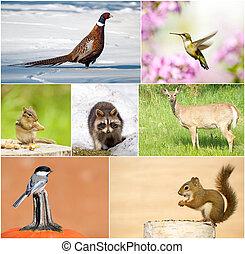 Wildlife collage - Colorful collage featuring a variety of...