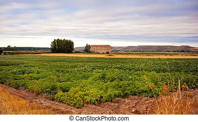 Cultivation in a spanish farm