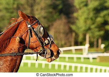 Horse Racing after the race,equestrian sport