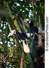 Toucan birds in the rainforest Indonesia