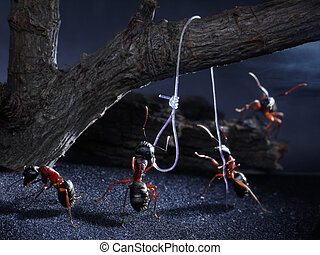 ants lynch law, thriller - sometimes ants execute traitors,...