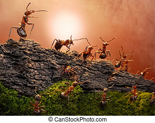 defence of great wall, ants stories - federations of...