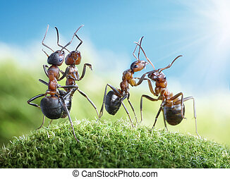 ants dancing under the sun - dancing under the sun (ants...