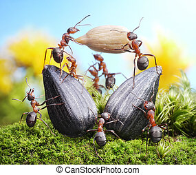 team of ants harvesting sunflower crop, agriculture teamwork