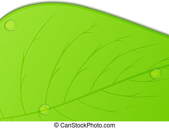 Background with green leaf