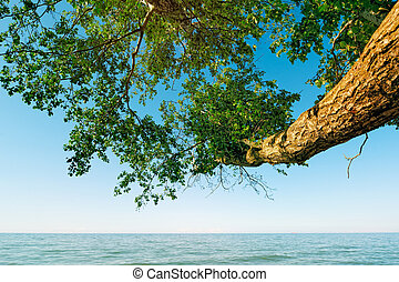 Horisontal - Tree the bowed above the sea surface