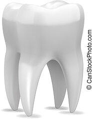 Vector Tooth - Fine vector tooth isolated on white...