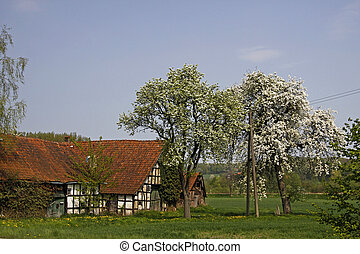 Timbered house with cherry blossom - Half-timbered house...