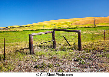 Farm Green Yellow Wheat Grass Fields Fence Barbed Wire Blue Skies Palouse Washington State Pacific Northwest