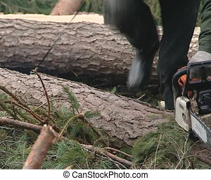 Uniformed worker cutting trees with chainsaw Forest...