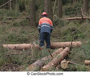 Uniformed workers cut trees with chainsaw. Forest cleaning.