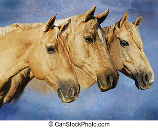 Portrait of Palomino Horse Trio - Ptofile portrait of...