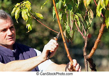 Man cutting branches