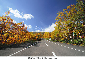 road and colorful leaves - road and some colorful leaves in...