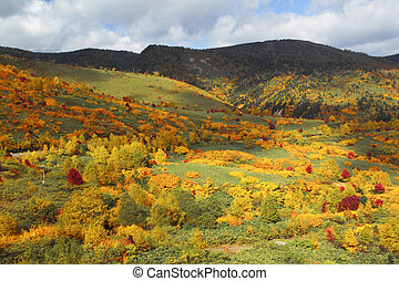 colorful leaves in Hachimantai - some colorful leaves in...