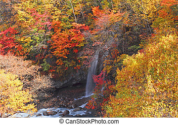 colorful leaves in Gully Matsukawa - colorful leaves and...