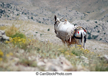 Horse in a semi desert - Desert landscape with horse in...