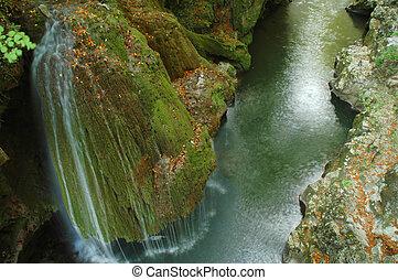 Forest stream running over rocks