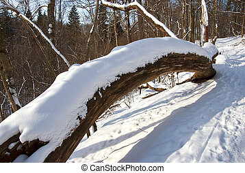 Broken tree trunk cover snow in winter and path