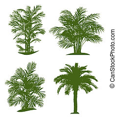 Palm tree silhouettes. Vector illustration