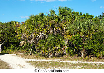 cluster of palm trees along dirt road - A large cluster of...