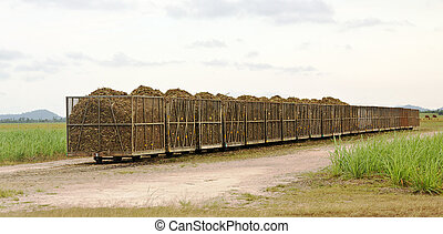 Rail bins full of cut sugarcane - Tramway bins loaded with...