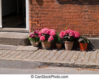 Colorful flower pots by a house