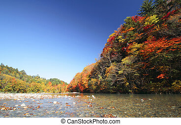 colorful leaves in Gully Matsukawa - colorful leaves in...