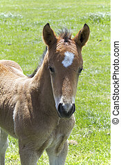 Young horse filly  - Young horse foal or filly in a paddock