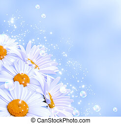 Daisies against the sky - Daisies and bubbles against the...