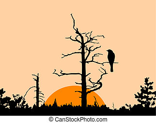 silhouette of the bird on dry tree