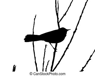 drawing bird on branch