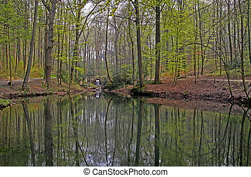 Pond with deciduous wood, Germany - Pond landscape with...