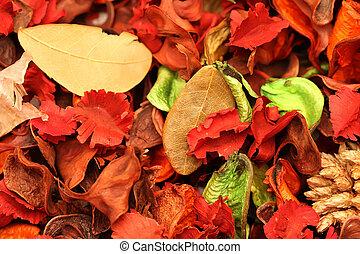 Leaves - Colorful leaves