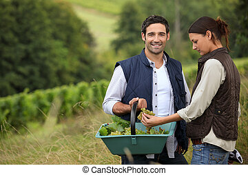 couple of wine-growers at harvest time