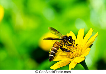bee and yellow flower in green nature - bee in green nature...