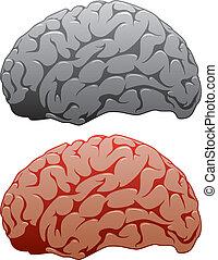 vector set of human brains