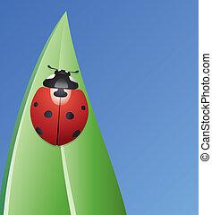vector ladybird on a leaf